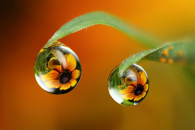 What was that ?- dewdrop refraction
