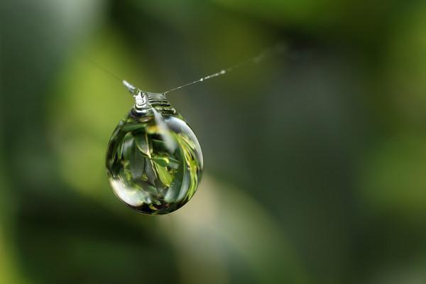 The raindrop
