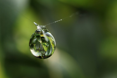 The raindrop