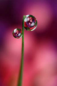 Bubblicious - dewdrop refraction
