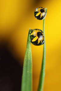 A shoulder to cry on - dewdrop refraction