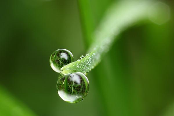 Natural dewdrop refraction