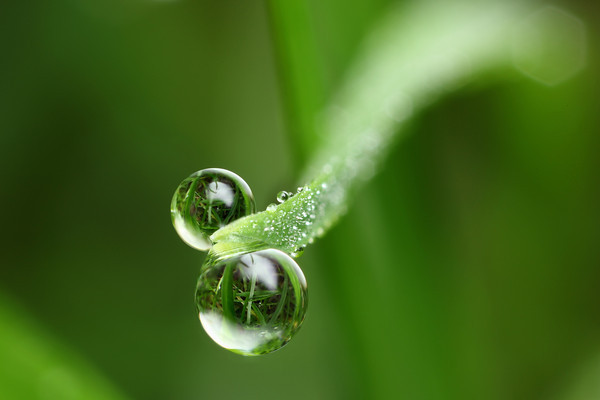 Natural dewdrop refraction