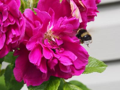 Flower Macro 2012