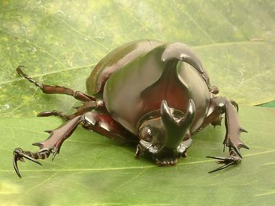 Beetle FS 131419