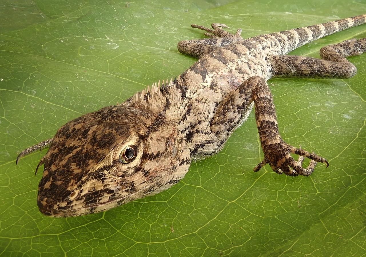 Gecko 158-180