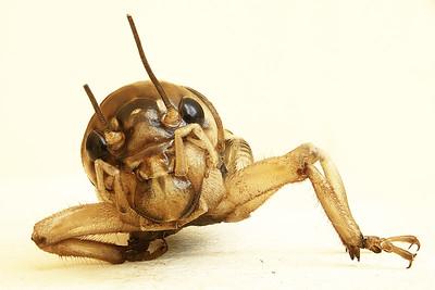 Stack Bug 1