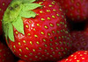 "<i><h2>""Fresh Picked""</i></h2> Macro Photo of the Day - DigitalPhotoNut.com 6/29/07"
