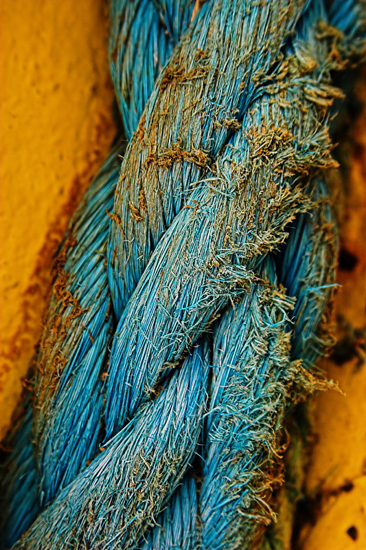 """<i><h2>""""Rope""""</i></h2> Macro Photo of the Day - Digitalimagecafe.com 3/03/06 Macro Photo of the Day - Digitalphotonut.com 7/05/07"""