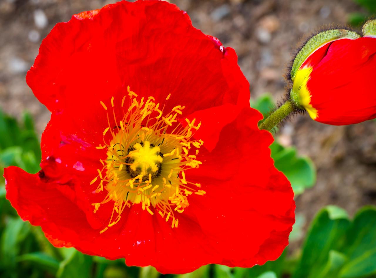Macros Denver Botanical Garden May 2013 -005