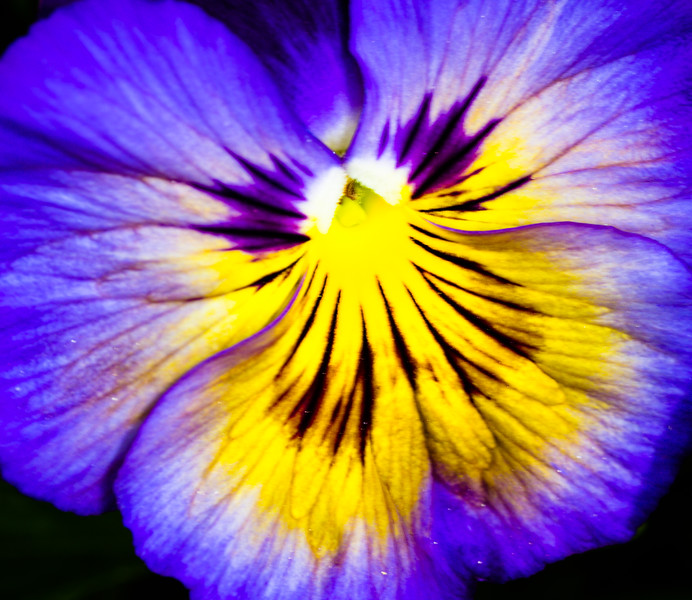 Macros Denver Botanical Garden May 2013 -018
