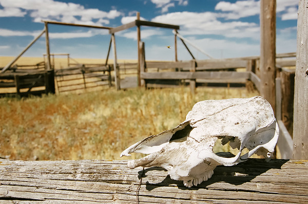 High Lonesome Cattle Corral.