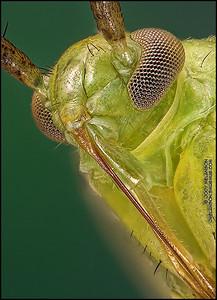 Shield Bug 4 crop