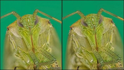Shield-Bug-Stereogram-Large