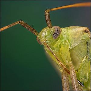 Shield Bug 4