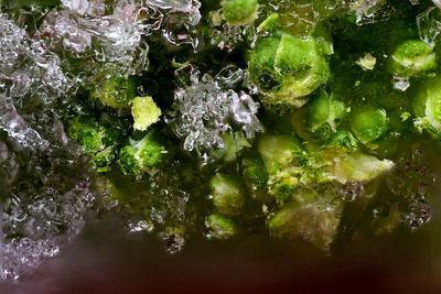 Broccoli in ice on top of sangria colored gel.