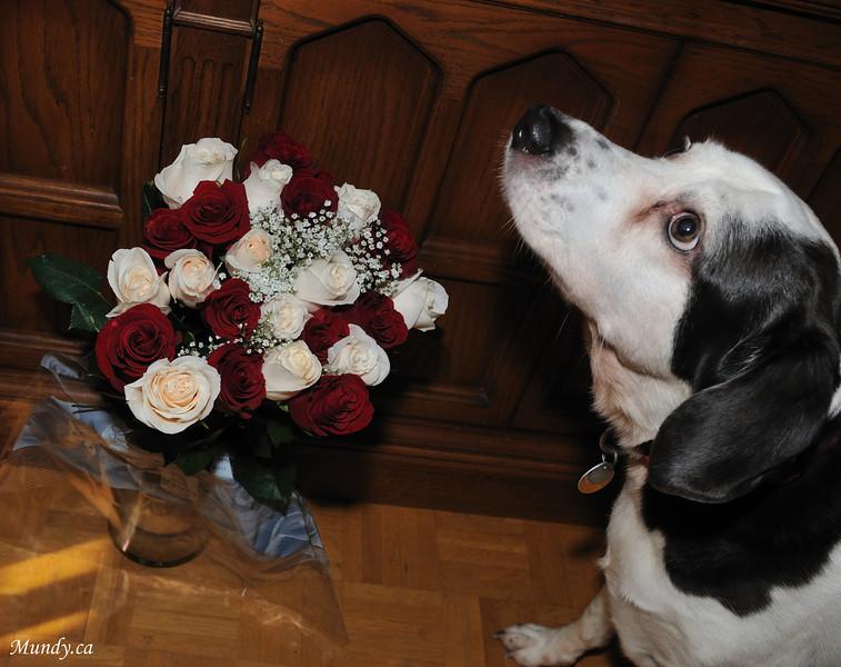 Wendy's birthday roses ...