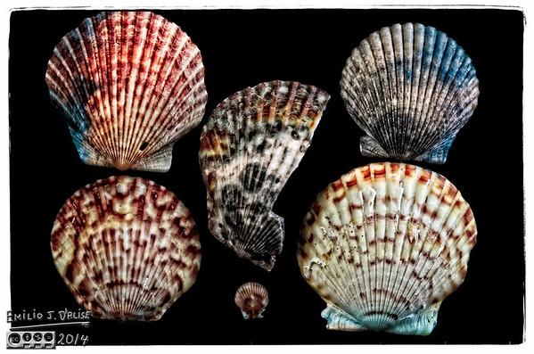 Shells - Second Batch