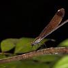 <b>Dragonfly #2</b> <i>Canon EOS 5D Mark II + Canon EF 100mm f/2.8 Macro USM</i>