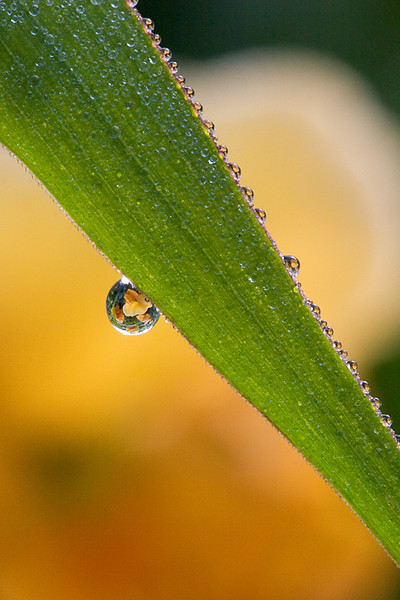 Refractions in a dew drop on a blade of grass.