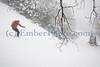 Emily Johnson - Early season skiing.<br /> Green Mountains, Vermont, USA