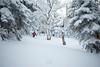 Emily Johnson - Green Mountains, Vermont