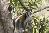 Isalo_Madagascar_2007_0018