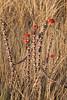 Isalo_Madagascar_2007_0003