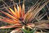 Isalo_Madagascar_2007_0004
