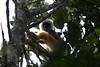 Perenet_Madagascar_2007_0010