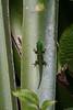 Perenet_Madagascar_2007_0016
