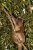 Ranomafama_Madagascar_2007_0008