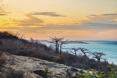 Baobab tree on sunset against bay of water Madagascar