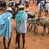 Zebu market, Ambalavao, Madagascar
