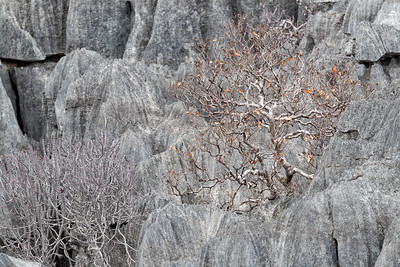 Stark rock formations of tsingy are challenging to navigate