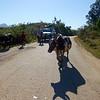 traffic jam, Madagascar style.
