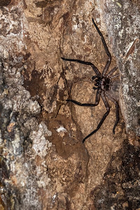 As do a large variety of spiders some quite large