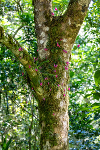 But there are dense forests in other areas with beautiful flowers