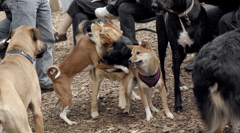 CHLOE (pup) MADDIE & FOXI