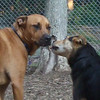 JOSEPHINE (rottweiler), MADDIE (indiana stockdog)