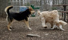 Lady (puppy), Hank (pup), Maddie_00003