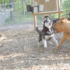MADDIE (stockdog)  DUKE (husky), ROCKY (french mastiff)