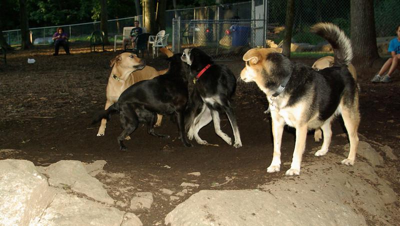 Roxie, Percy, Maddie,  buffy_001