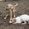 Evie (puppy), Gracie, Maddie_00001