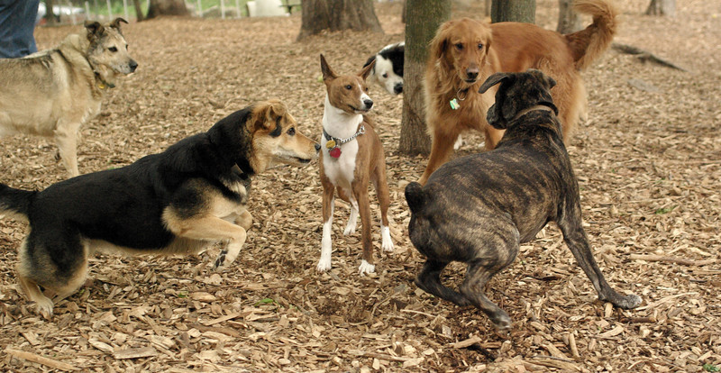maddie, shamus, dakota, foster, jack