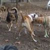 MADDIE (indiana stockdog), ROSCO (bulldog), LUNA (yellow lab), ROBIN (great tail)