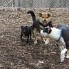 BUD W. Maddie, Faith terrier