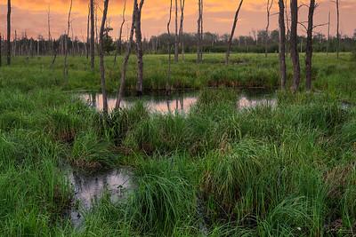Wetland Pond at Sunset, Madeline Island, Wisconsin