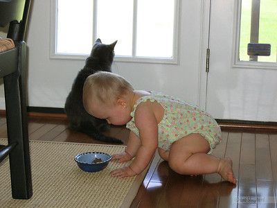 I'm not touching the cat food...I'm not touching the cat food...