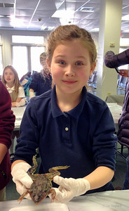 3rd grade frog dissection 2/21/13